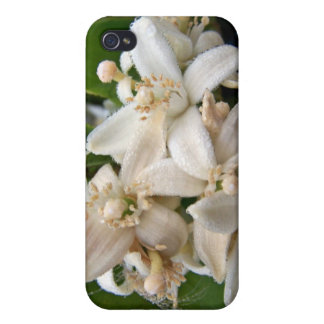 White citrus blossoms ed in dew iPhone 4 cover