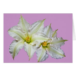 White Clematis Card