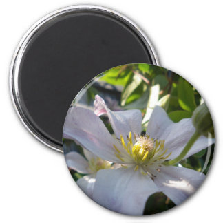 White Clematis II Magnet