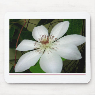 white clematis mousepad