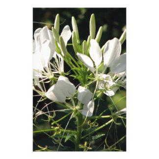 White Cleome' Spider flower Stationery Design