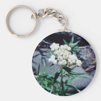 white Close-up of wild flower, Baxter State Park f Basic Round Button Keychain