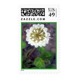 White Clover Blossom 1 Stamp