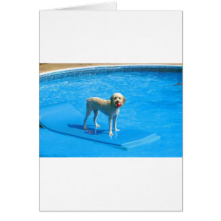 White Cockapoo Dog Swimming on a Raft Card