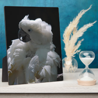 White Cockatoo Bird Plaque