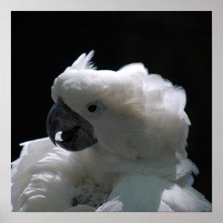White Cockatoo Bird Posters