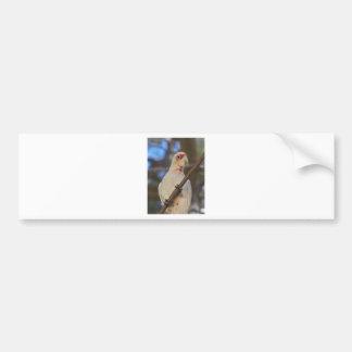 White Cockatoo Bumper Sticker