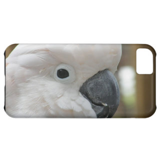 White Cockatoo Cover For iPhone 5C