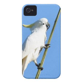 WHITE COCKATOO RURAL QUEENSLAND AUSTRALIA Case-Mate iPhone 4 CASE