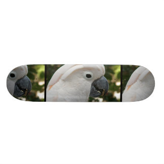 White Cockatoo Skate Board Decks