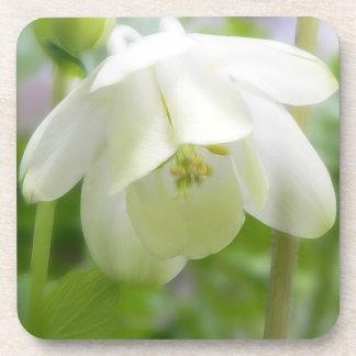 White Columbine Flower  - Aquilegia Beverage Coaster