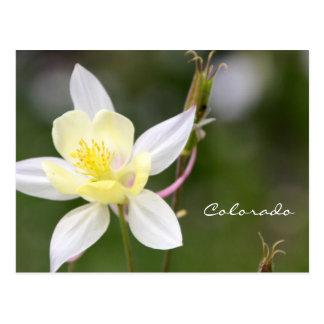 White Columbine Postcard