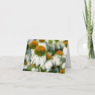 White Coneflower Note Card