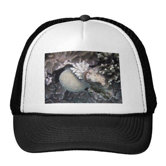 White Coral Trucker Hat