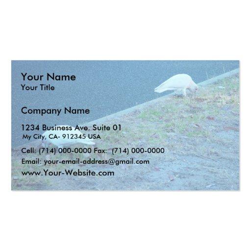 White Corellas On Roadside Business Card