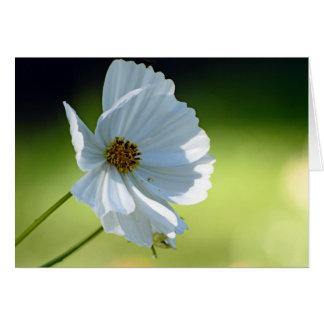 white cosmos card