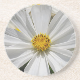 White Cosmos Flower Coaster