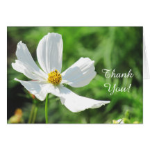 White Cosmos Flower Greeting Card