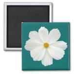 White Cosmos Flower Refrigerator Magnet