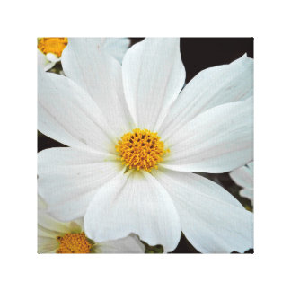 White Cosmos - Wrapped Canvas Wall Decor Canvas Print