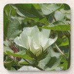 White Cotton Crop Blossom Drink Coaster
