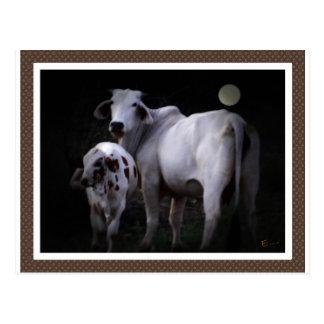 White Cow and Calf Postcard