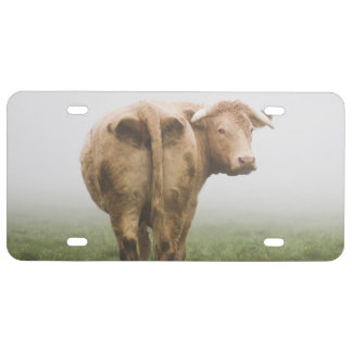 White Cow Bull looking Back in a Foggy Field License Plate