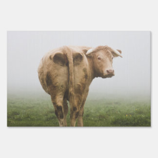 White Cow Bull looking Back in a Foggy Field Yard Signs