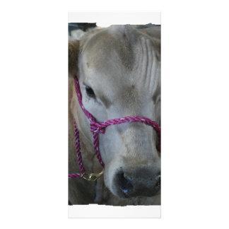 White Cow Head Shot at County Fair Rack Card
