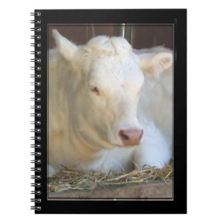 White Cow Notebook