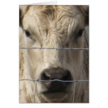 White Cow - Western Change of Address Stationery Note Card