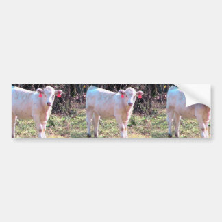 White Cow With Tagged Ears In A Wide Meadow Bumper Stickers