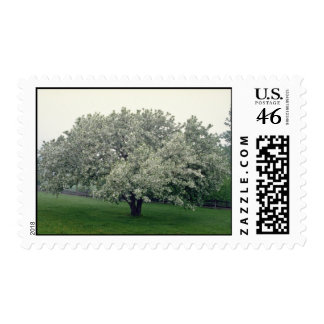 white Crab apple tree, Quebec, Canada flowers Postage Stamps