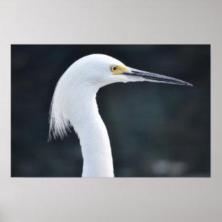 White Crane Bird Face 2 Poster