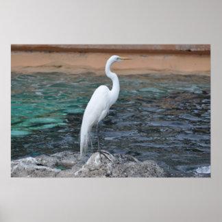White Crane Bird Face 3 Poster