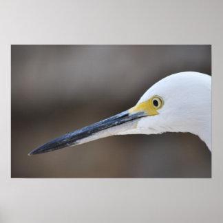 White Crane Bird Face Poster