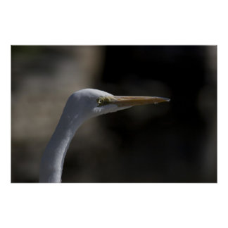 White Crane Bird Headshot Photo Poster