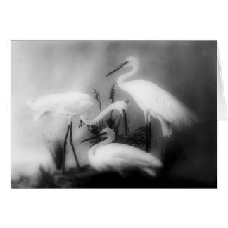 White cranes on the Grass Card