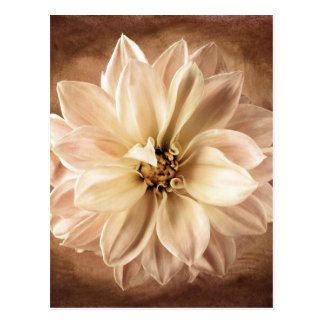 White, Cream, Brown Dahlia Background Customized Postcard