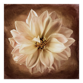 White, Cream, Brown Dahlia Background Customized Poster