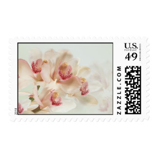 White cream Orchids in full bloom Postage