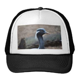 white crested crane looking right bird trucker hat