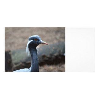 white crested crane looking right bird photo card