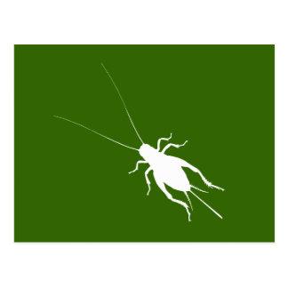 White Cricket Postcard