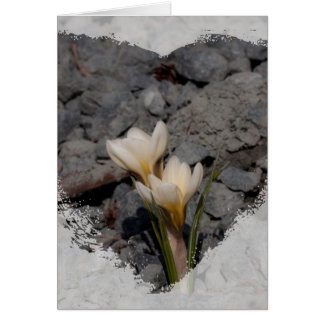 White Crocus Card