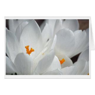 White crocus flower card with friend love message