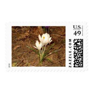 White Crocus Postage