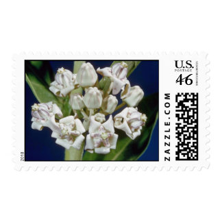 white Crown flower Calotropis procera flowers Stamps