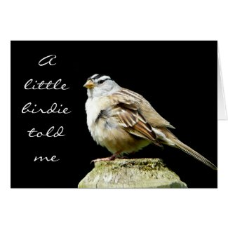 White Crowned Song Sparrow card