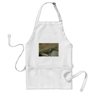 White-crowned sparrow aprons